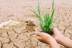 Hands defending green grass sprout. Global warming theme human hands defending green grass sprout ri Stock Photography