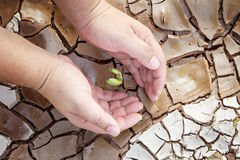 Hands defending green tree sprout on cracked ground Stock Photo