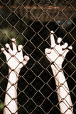 Hands in desperate grip onto prison fence. Bleached filtered image of Hands in desperate grip on mesh wired fence, symbolising captivity, hopeless, kidnapping Royalty Free Stock Photography