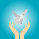 Hands and dove Royalty Free Stock Images