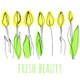 Hands drawn isolated tulips. Fresh beauty. Black and white drawing with abstract yellow and green spots Stock Photos