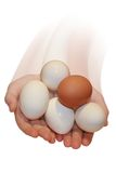 Hands with eggs. Hands holding bright tasty eggs Stock Photography