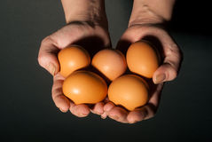 Hands with eggs Stock Image