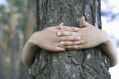 Hands Embracing Tree Trunk Stock Images