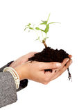 Hands of environment protection Stock Photos