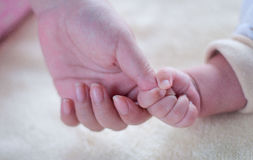 Hands of a family Stock Photography