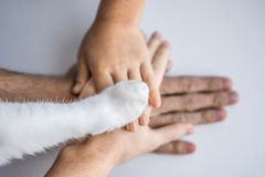 The hands of the family and the furry paw of the cat as a team. Fighting for animal rights, helping animals.  royalty free stock images