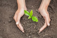 Hands of farmer growing and nurturing tree growing on fertile soil, environment Earth Day In the hands of trees growing seedlings royalty free stock image