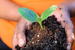 Hands of farmer holding soil and fresh young green plant together stock image