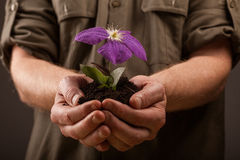 Hands of farmers holding a young flowers in hands,ecology concep Stock Photography