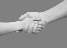 Hands of father and son on a gray background Royalty Free Stock Photos