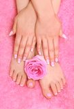 Hands and feet with a rose. Foot massage and herbal therapy Stock Photography