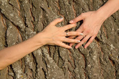 Hands Female Embracing Tree Stock Image