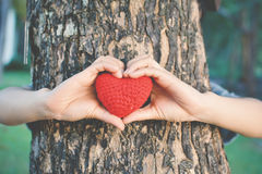 Hands female holding red heart on nature background stock photos