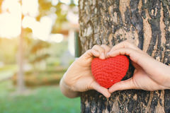 Hands female holding red heart on nature background royalty free stock photo