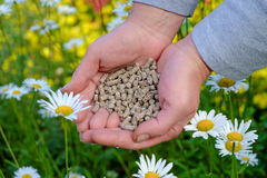 Hands with fertilizer. Hands with the granular fertilizer on the blooming garden in the background royalty free stock images