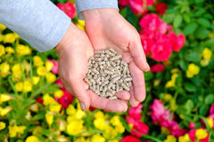 Hands with fertilizer. Hands with the granular fertilizer on the blooming garden in the background Stock Photography