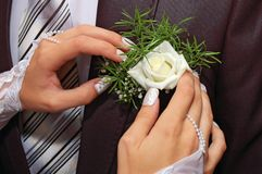 Hands fiancee on the buttonhole of groom Stock Images