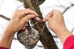 Hands fixing bird feeder Stock Image