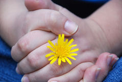 Hands with flower. Holding hands with yellow flower Stock Image