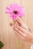 Hands with flower in spa Royalty Free Stock Image