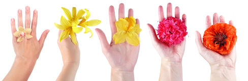 hands with flowers Stock Photography