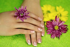 Hands with flowers Royalty Free Stock Images