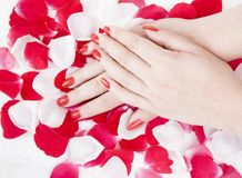 Hands and Flowers Royalty Free Stock Photo