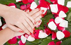 Hands and Flowers Royalty Free Stock Image