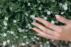 Hands in the flowers. Royalty Free Stock Photo