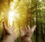 Hands in forest. Hands reaching for the light in forest Royalty Free Stock Image