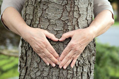Hands forming heart on tree Stock Images