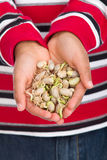 Hands Full of Bean Sprouts Stock Photos