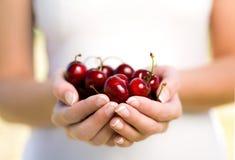 Hands full of cherries stock image