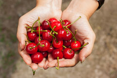 Hands full of cherries Royalty Free Stock Photos