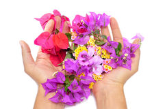 Hands full of flowers Stock Photos
