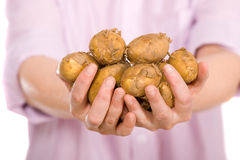 Hands full of fresh potatos Royalty Free Stock Photography