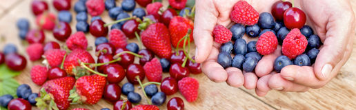 Hands full of healthy organic fruits - wild berries Stock Images