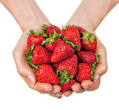 Hands full of organic strawberries. Isolated on white background royalty free stock photography