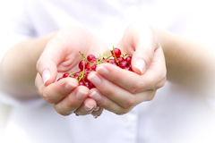 Hands full of red currants. A woman's hands full of red currants Stock Photography