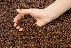 Hands full of roasted coffee beans Royalty Free Stock Photo