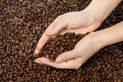 Hands full of roasted coffee beans Stock Photo