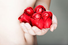 Hands are full of rosebuds Royalty Free Stock Image