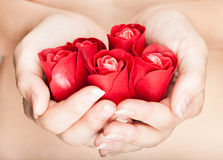 Hands are full of rosebuds Royalty Free Stock Photo