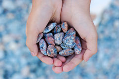 Hands full of sea stones Royalty Free Stock Image