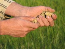 Hands full of soil Royalty Free Stock Photos
