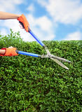 Hands with garden shears Stock Photography