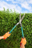 Hands with garden shears Royalty Free Stock Photo