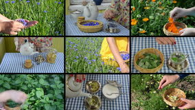 Hands gather herb plants and make herbal tea. Footage collage stock footage