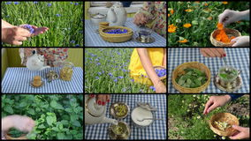 Hands gather herbs and make herbal tea. Clips collage